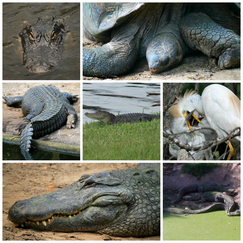 Stock Photography: Florida Wildlife